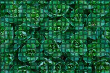 Background from green leaves in the form of puzzles. Background from puzzles.