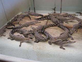 Baby Crocs