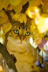 Yellow Bengal Kitten on Tree
