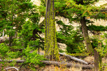 One of the pointers of pure environment is trees covered with lichens
