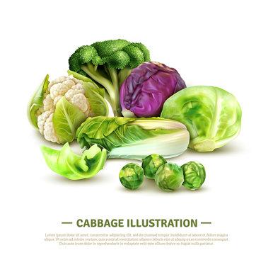 Realistic Cabbage Illustration
