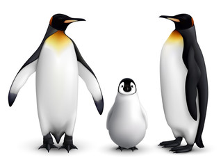 Penguin Realistic Set