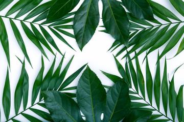 Sehr schöne grüne Palmen Blätter für Produkt Repräsentation auf der Banner Homepage mit weißem Hintergrund