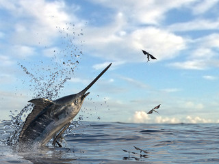 Marlin swordfish getting out of water to catch flying fishes in ocean 3d Render