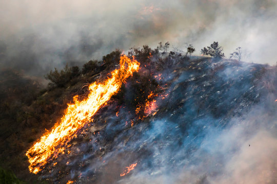 Detail Burning Hillside wtih Brush and Trees Flame and Smoke During Woolsey Fire California