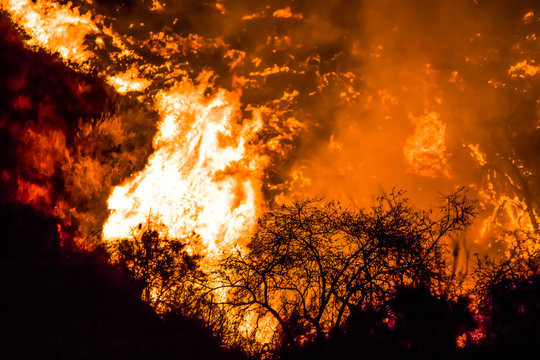 Close Up Brush in Silhouette with Flames Behind on California Hillside Woolsey Brushfire