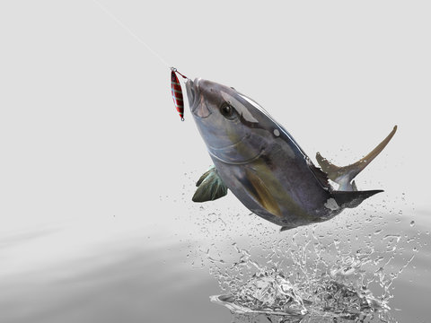 Cathing amberjack fish in white background with splashes hooked by jig bait 3d render