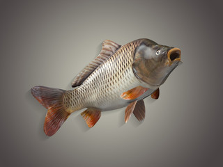 Common european carp fish with curved body 3d render isolated in matching color background