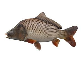 Side view of carp fishing 3d render