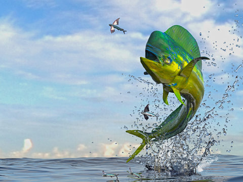Mahi mahi dorado fish  jumping to catch flying fished in ocean 3d render