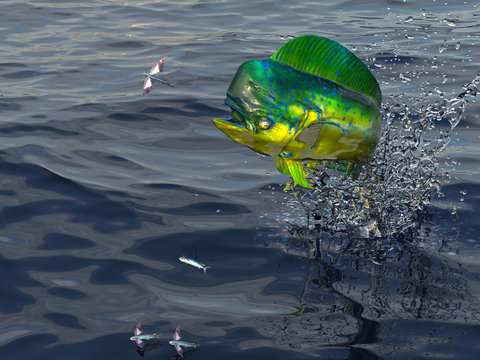 Dorado maimai fish is after flying fished on sea surface 3d render