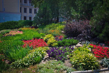 Flower bed in the city center