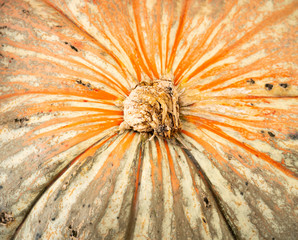 Close Up View Multiple Colors Pumpkin Gourd Fall Harvest