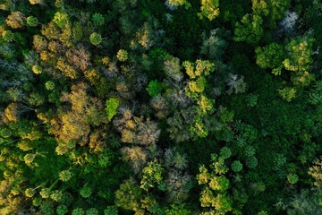 Aerial view of a forest and its sunset illuminated canopy