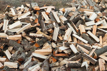 On the ground lies a pile of firewood.