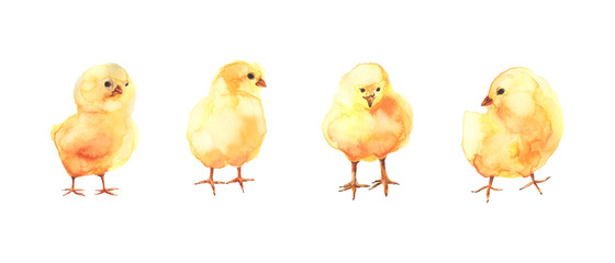 Yellow chickens. Watercolor iilustration.