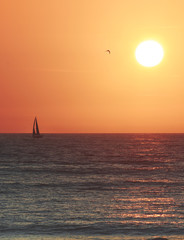 Simple Sunset with Single Sail Boat and Bird
