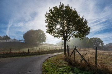Country road in the morning, sunlight