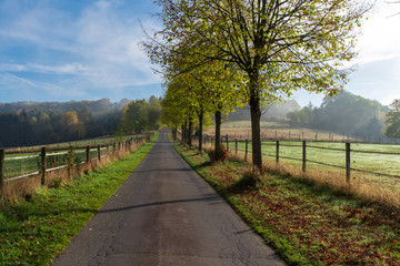 country road with trees in autumn
