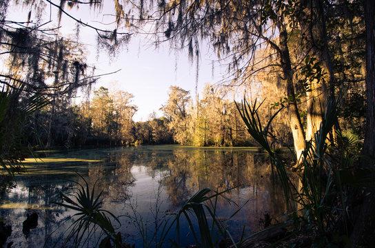 Magnolia Plantation and Gardens in Charleston, South Carolina.