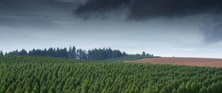 Storm Over The Tree Farm