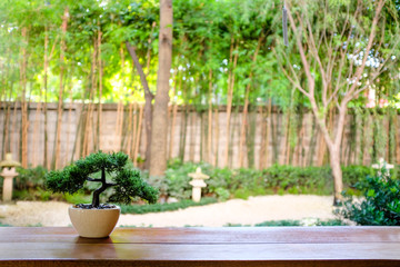 Planted bonsai tree in yellow ceramic pot with blurred japanese zen garden background