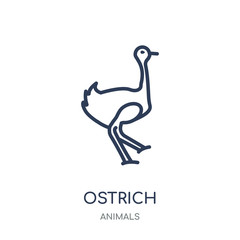 Ostrich icon. Ostrich linear symbol design from Animals collection.