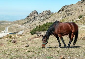 Horse in Sierra Nevada mountains