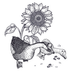 Realistic hand drawing of geese and sunflower isolated on white background.