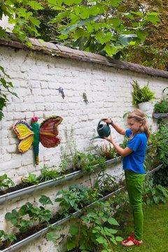 Girl watering plants planted in guttering on garden wall
