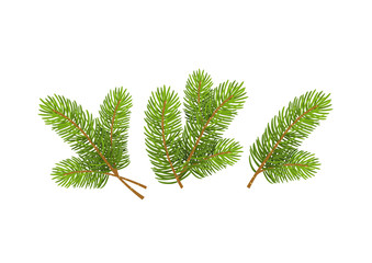 Set of Realistic Detailed Christmas tree branches Symbol of New Year isolated