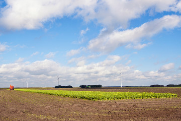 Harvesting sugar beets in a typically Dutch polder landscape.