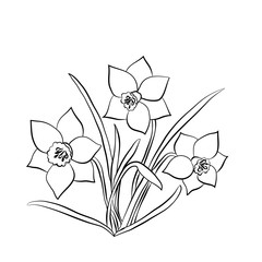 Elegance pattern with flowers narcissus
