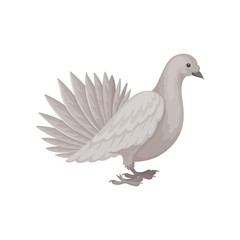 Gray dove, side view. Bird with fluffy tail. Flying creature. Flat vector element for poster or banner