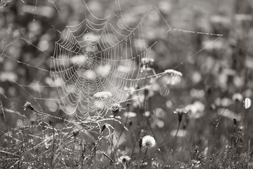 Spider web in the grass, summertime outdoor theme