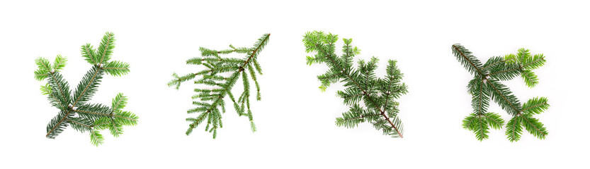 Set of different conifer branches on white background. Flat lay, top view