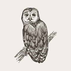 Vector hand drawn ink pen illustration. Owl sitting on a tree stump. Flower decoration in the corner. One color design. Isolated image. Sketch artwork