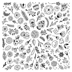 Flowers and plants hand drawn big vector set on white background. Different botanical illustrations, florals, leaves and branches