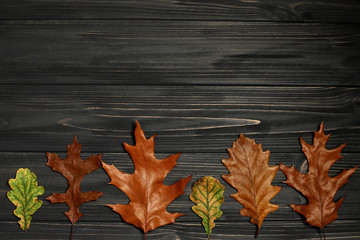 autumn leaves of oak on black wooden background