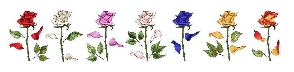 Roses hand drawing and colored. A blossoming rosebuds set. Vector illustration.