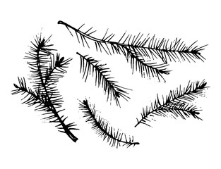 A set of sketches of pine twigs.