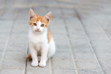 little kitty sitting on a pavement looking ahead
