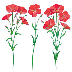 Vector set with outline red Flax plant or Linseed or Linum flowers bunch, bud and green leaf isolated on white background. Botanical illustration of ornate Flax in contour style for summer design.