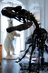 A dinosaur skeleton, an Allosaurus discovered in Wyoming, is reconstructed ahead of an auction at  Artcurial auction house in Paris