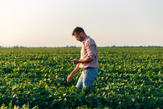 Young farmer standing in filed holding tablet in his hands and examining soybean corp.