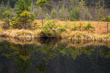Beautiful reflection of coniferous trees in a mountain lake. Natural background.