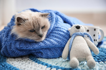 Cute cat in knitted sweater with toy lying on floor at home. Warm and cozy winter