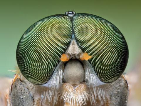 Extreme portrait macro of polish green fly