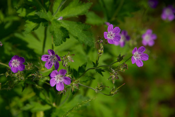 FLOWERS: violet on green