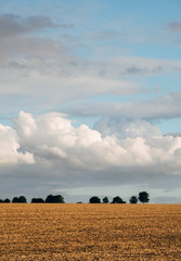 Clouds and trees on the horizon of an empty field. Norfolk, UK.
